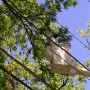 Tree Trimming, Dallas Tree Trimming Services, Tree Trimming Safety