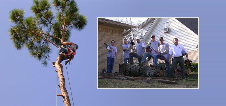 White Rock Tree Wizards Teamwork
