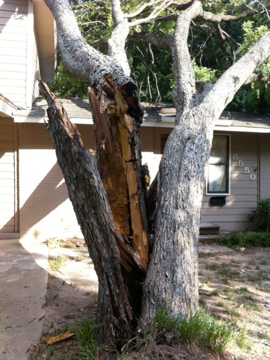 Tree needs repair from a trained tree doctor