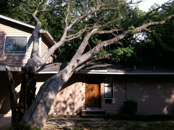 Tree will hurt home